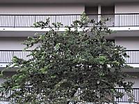 Dscf8704