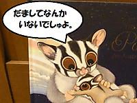 20150805possum